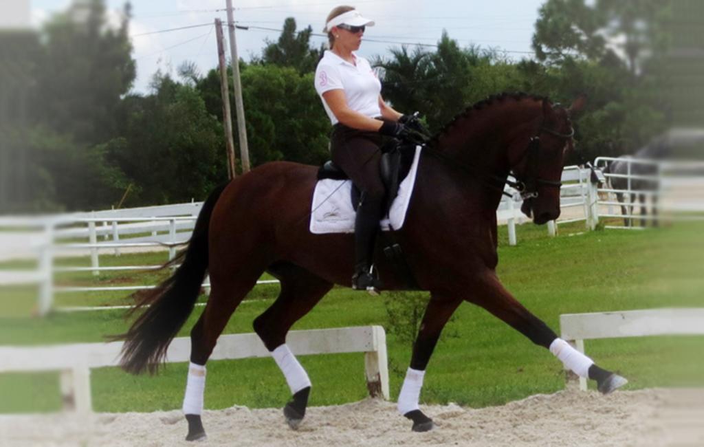 beau2 - sale horse